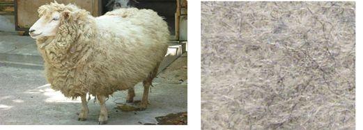 【羊とフェルト】