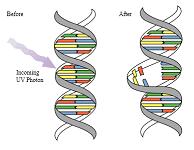 紫外線の科学 3. 紫外線殺菌の原理