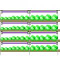 紫外線除草効果-紫外線灯の活用法